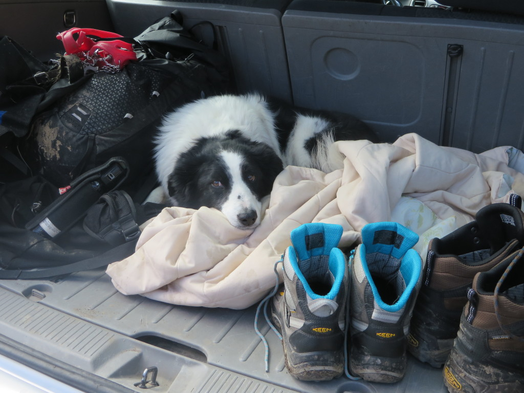 Taylor in the boot - of the car! (Photo credit: M. Kopp)