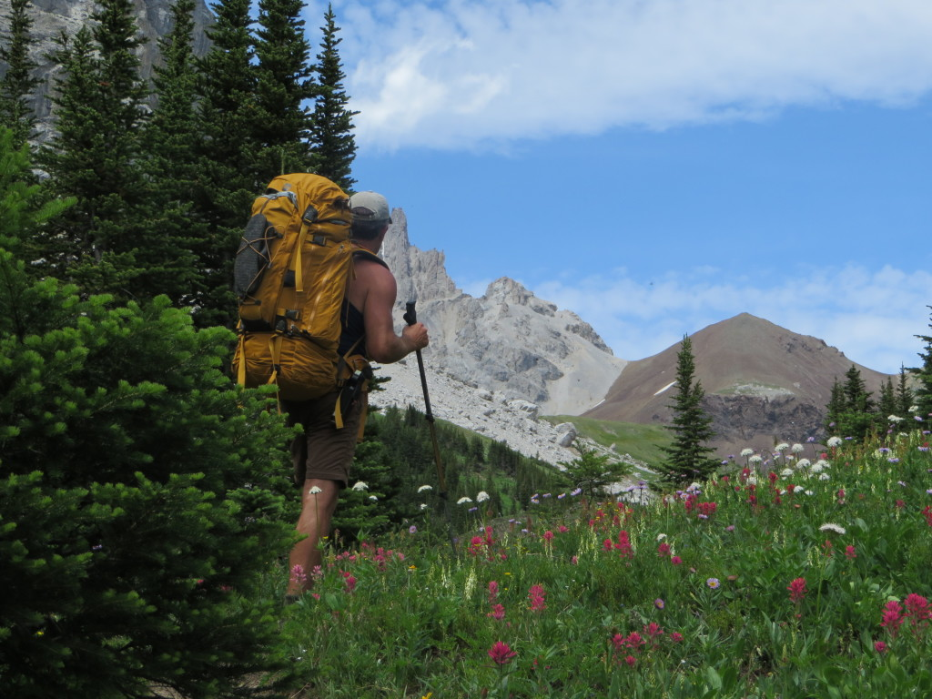 Wildlfowers in full bloom on the approach to the meadows below Piper Pass. (Photo: M. Kopp)